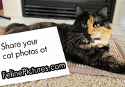 Piper a Tortoiseshell cat with a message for all Feline Lovers